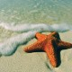 6969083-seastar-on-beach